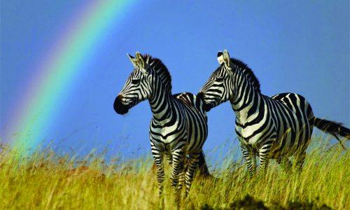 Kruger National Park_2