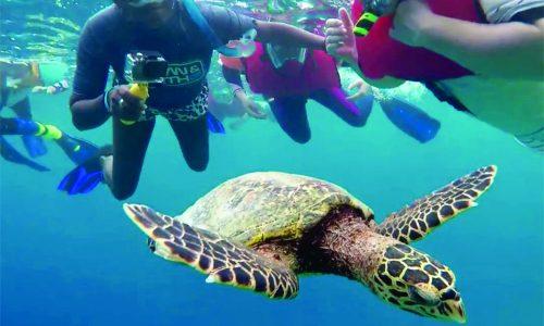 amari havodda maldives-diving